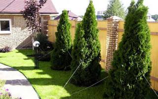 Расстояние от забора соседей до посадки кустов и плодовых деревьев