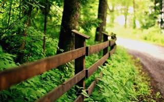 На каком расстоянии от фундамента можно сажать деревья по закону