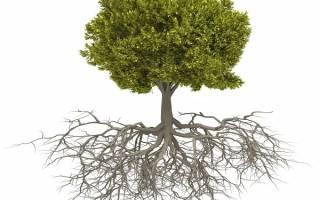 На каком расстоянии от фундамента дома можно сажать деревья